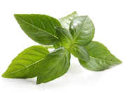 Organic Basil Essential Oil
